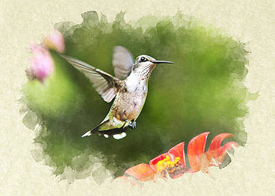 Hummingbird Shimmering Breeze Blank Note Card Art Print