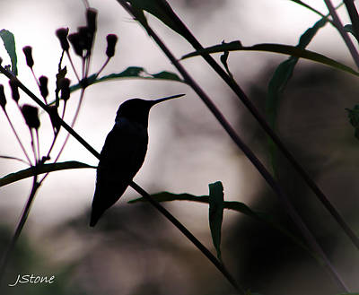 Ethereal - Hummingbird Silhouette 8/17/15 by Jeffrey Stone