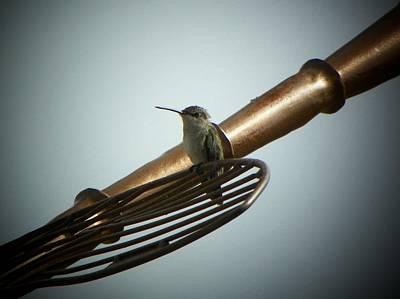 Photograph - Hummingbird Sitting On Metal by Joseph Frank Baraba