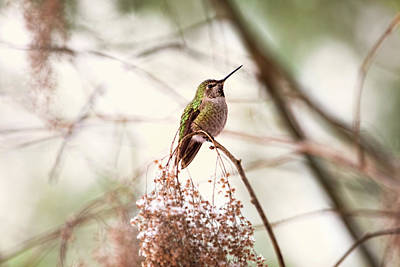 Photograph - Hummingbird Sitting On Snowy Branch by Peggy Collins