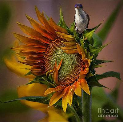 Hummingbird Sitting On Top Of The Sun Art Print by John  Kolenberg