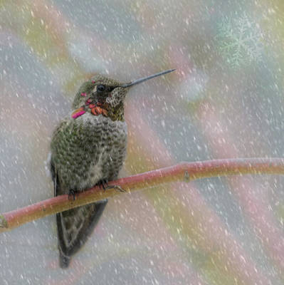 Art Print featuring the photograph Hummingbird Snowfall by Angie Vogel