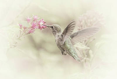 Photograph - Hummingbird Softly by Angie Vogel