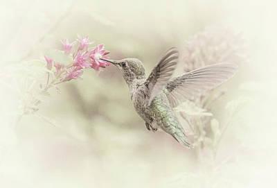 Hummingbird Softly Art Print