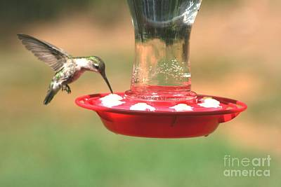 Photograph - Hummingbird by Stacy C Bottoms