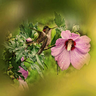 Photograph - Hummingbird Summer by TnBackroadsPhotos