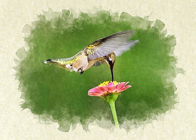 Hummingbird Sun Sweet Blank Note Card Art Print