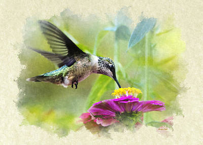 Photograph - Hummingbird Sweetness Blank Note Card by Christina Rollo
