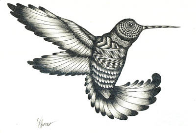 Hummingbird Drawing - Hummingbird by Thomas Jones