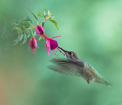 Photograph - Hummingbird Tranquility by Angie Vogel