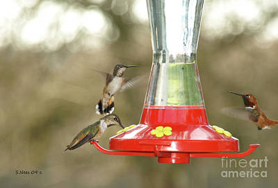 Hummingbird Trio Art Print by Shari Nees