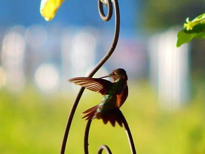 Photograph - Hummingbird  by Virginia Kay White