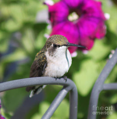 Photograph - Hummingbird Waiting Spot by Cathy  Beharriell