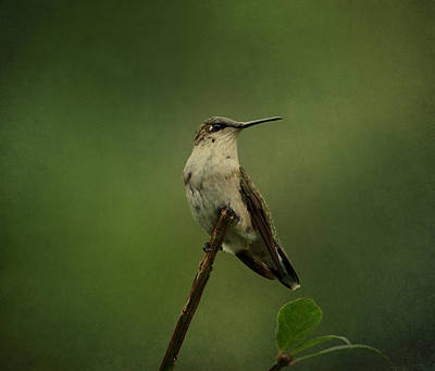 Photograph - Hummingbird Watching by Sandy Keeton