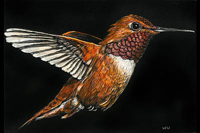 Drawing - Hummingbird by William Underwood