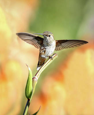 Photograph - Hummingbird Wings by Athena Mckinzie
