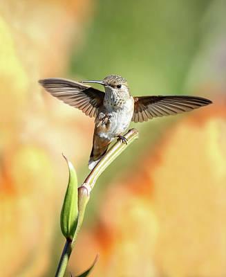Photograph - Hummingbird Wings by Athena Mckinzie