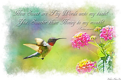 Photograph - Hummingbird With Bible Verse by Debbie Portwood