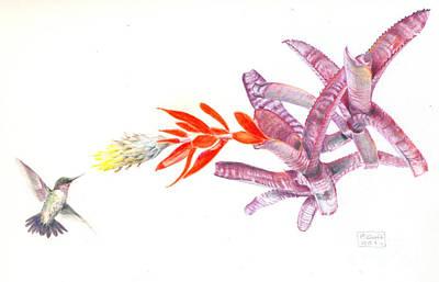 Hummingbird With Bromeliad Art Print