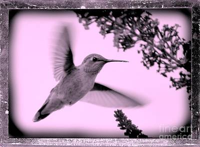 Butterfly In Flight Photograph - Hummingbird With Old-fashioned Frame 2  by Carol Groenen