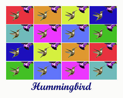 Photograph - Hummingbird X16 Titled by Lou Ford
