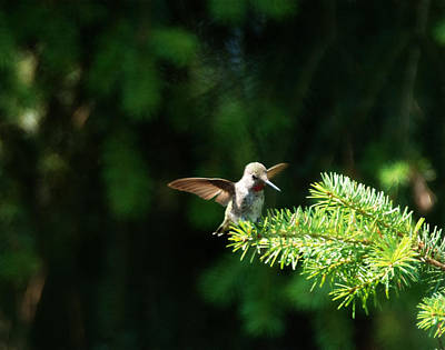 Photograph - Happy Hummingbird by Marilyn Wilson