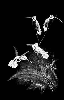Digital Art - Hummingbirds 16 by EricaMaxine Price