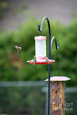 Photograph - Hummingbirds At Garden Feeder by Ella Kaye Dickey