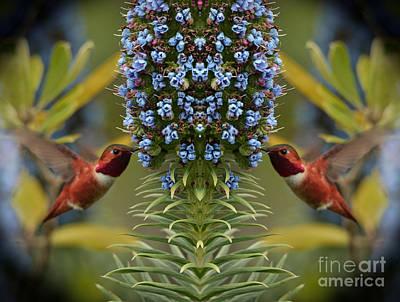 Photograph - Hummingbirds Feeding On Echium Flowers by Jim Fitzpatrick
