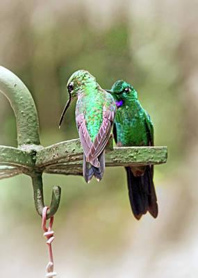 Photograph - Hummingbirds In Monteverde Garden by Carolyn Derstine