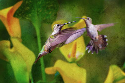 Lilies Royalty-Free and Rights-Managed Images - Hummingbirds in Virginia by Betsy Knapp