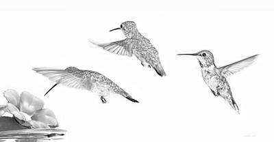 Photograph - Hummingbirds Monochrome Trio by Jennie Marie Schell