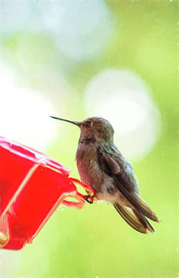 Photograph - Hummingbird At Rest 2 by Marilyn Wilson