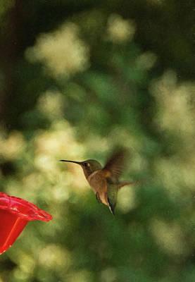 Photograph - Baby Hummingbird by Marilyn Wilson