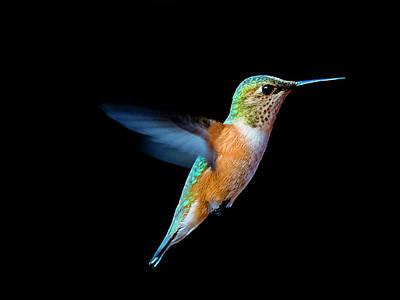 Photograph - Hummming Bird by Edward Kovalsky