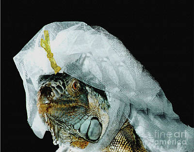 Photograph - Here Comes The Iguana Bride by Carol F Austin