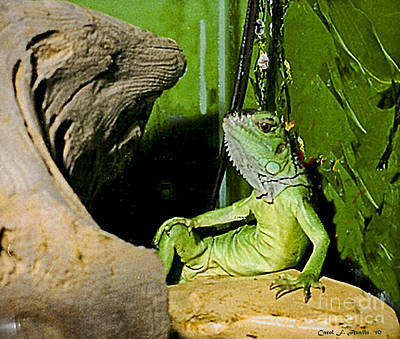Humorous Pet Iguana Photo Art Print by Carol F Austin