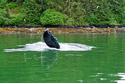 Photograph - Humpback Flipper - Auke Bay Harbor - Juneau Alaska by Cathy Mahnke