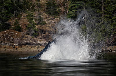 Photograph - Humpback Headstand by Randy Hall
