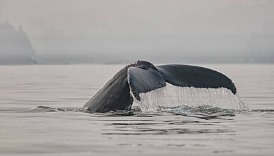 Photograph - Humpback In The Mist by Randy Hall