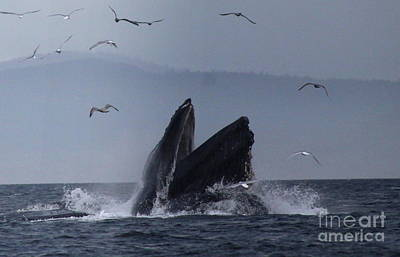 Photograph - Humpback by Lennie Malvone