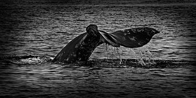 Photograph - Humpback Tail 365-169 by Inge Riis McDonald