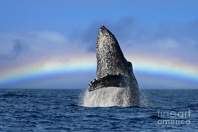 Digital Art - Humpback Whale Breach by David Olsen