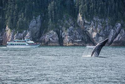 Zen - Humpback Whale breach by Matt Skinner