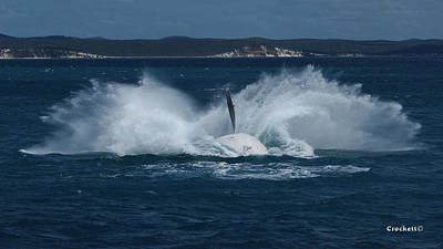Photograph - Humpback Whale Breaching 10 Image 3 Of 3 by Gary Crockett