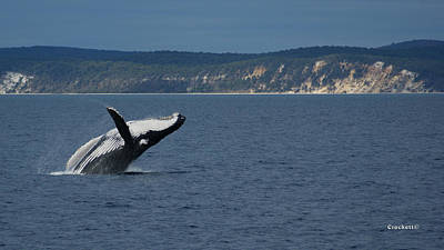 Photograph - Humpback Whale Breaching 15 Image 1 Of 1 by Gary Crockett
