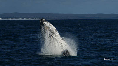 Photograph - Humpback Whale Breaching 17 Image 1 Of 4 by Gary Crockett