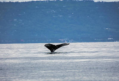 Photograph - Humpback Whale Diving by Gloria Anderson