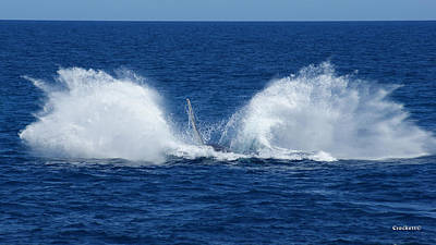 Photograph - Humpback Whale Double Breach Image 3 Of 3 by Gary Crockett