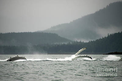Photograph - Humpback Whale Fins by Louise Magno